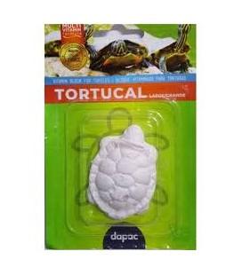 TORTUCAL CALCIO TORTUGAS