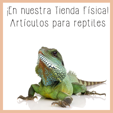 Reptiles tienda dinomascota